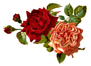 stock roses digital images