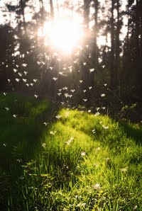 ♥ aqui raios de sol douram a grama...