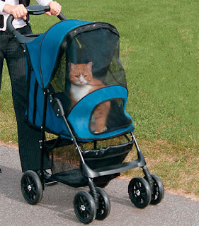 Picture of a cat in a cat stroller. He doesn't look thrilled.