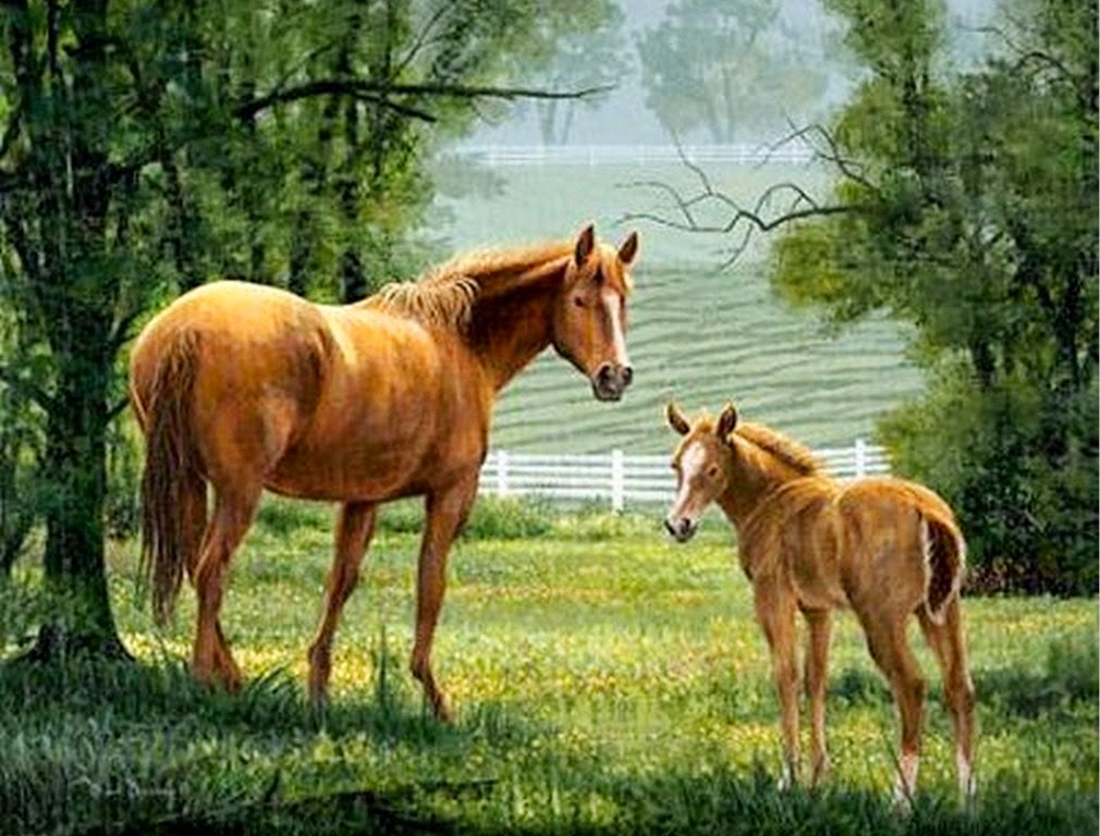 paisajes-comerciales-con-caballos