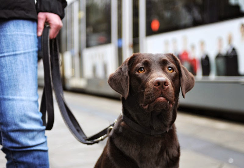 Hund müssen in Bremen noch bis zum 15. Juli angeleint werden.