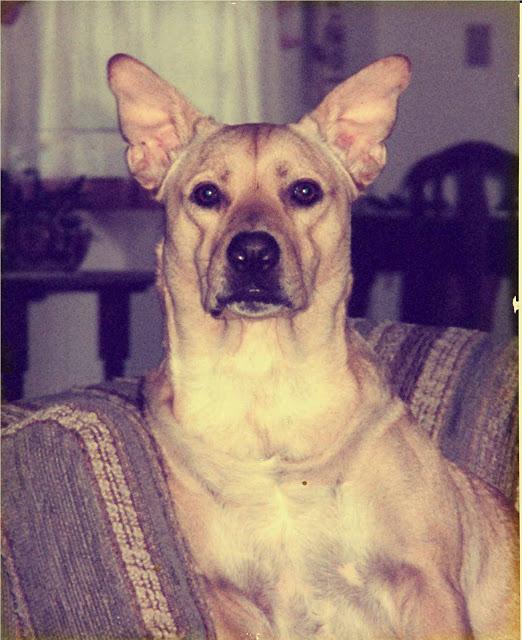Max 1986 - 2002