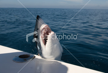 mako shark picture