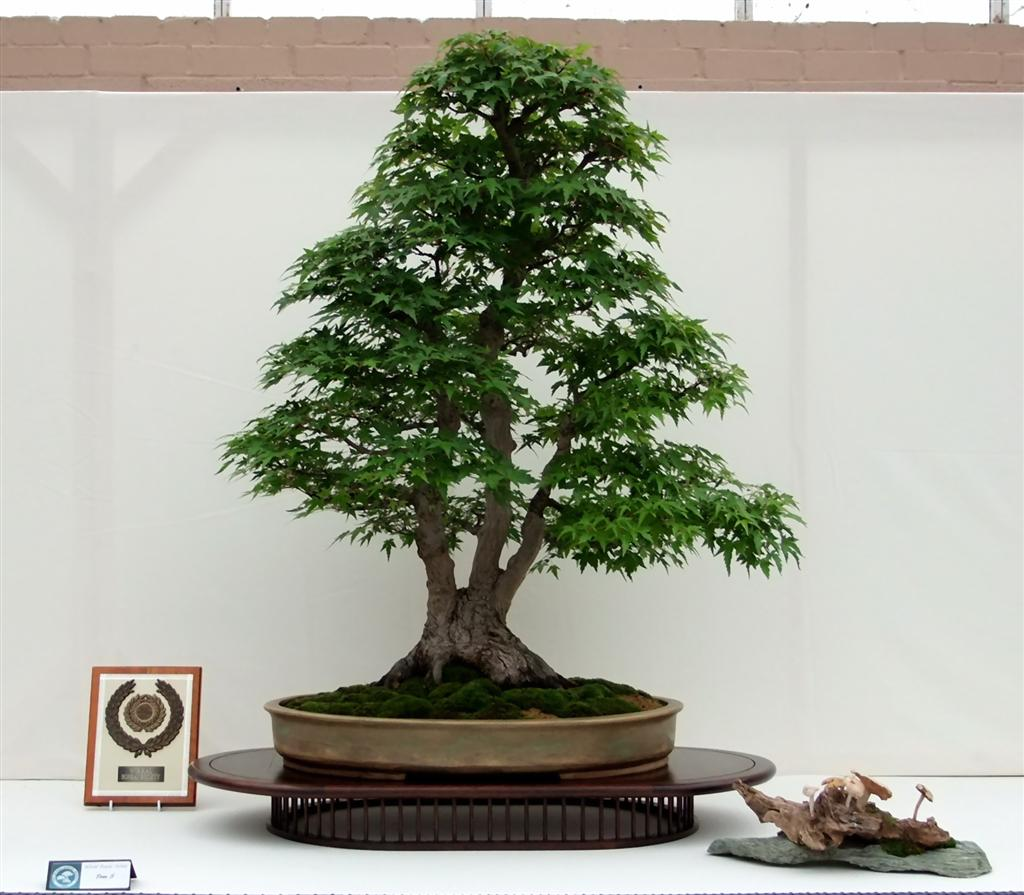 Wirral Bonsai Society August 2011