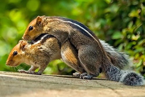 foto binatang bercinta