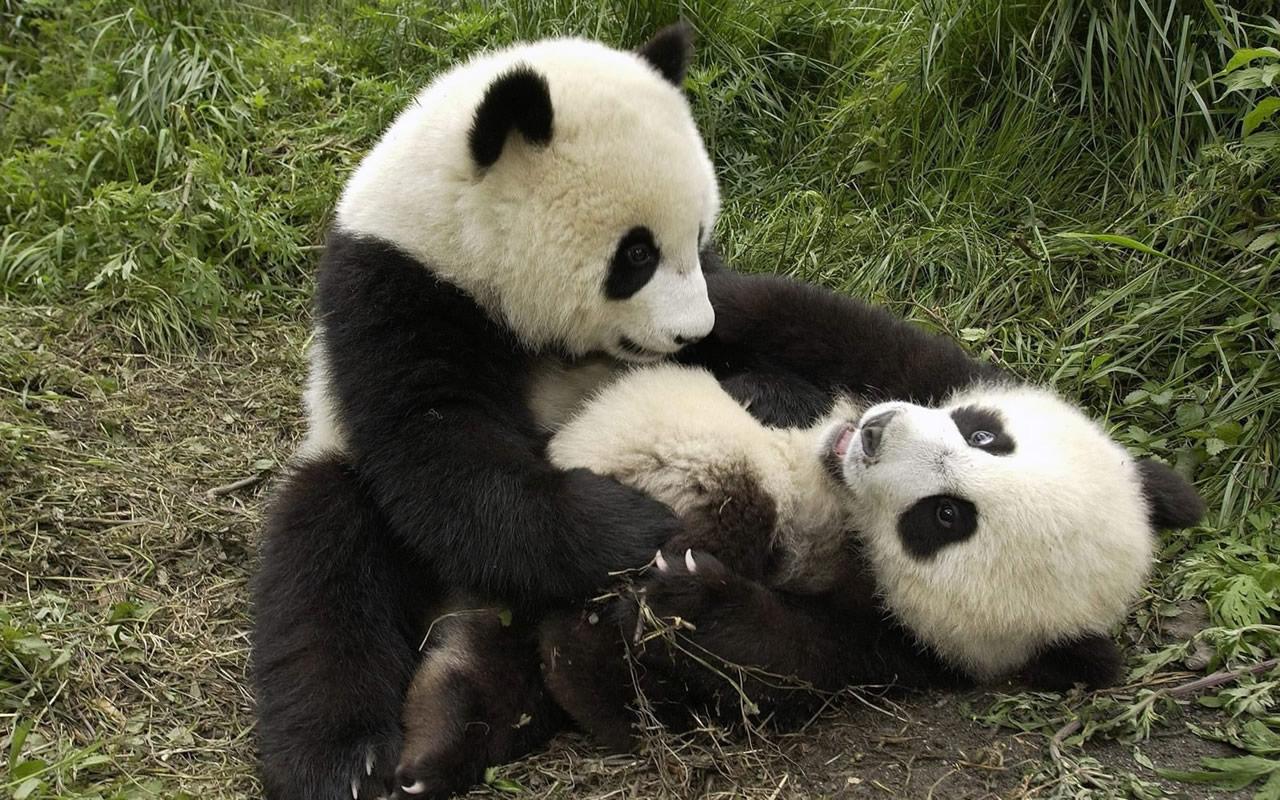 Baby Wallpaper Download Hd For Mobile Border Desktop Designs Full Screen 2013 Panda
