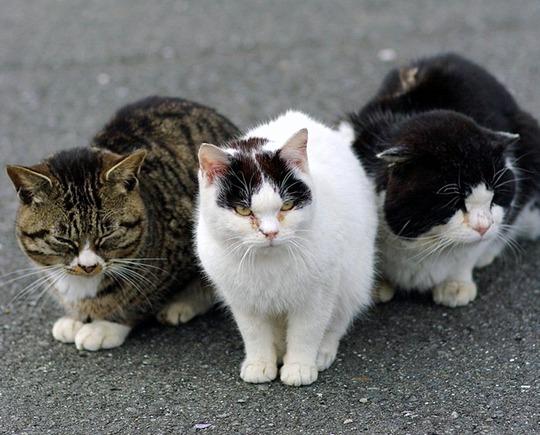 cat island tashirojima
