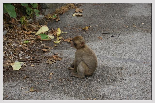 Bebé mono