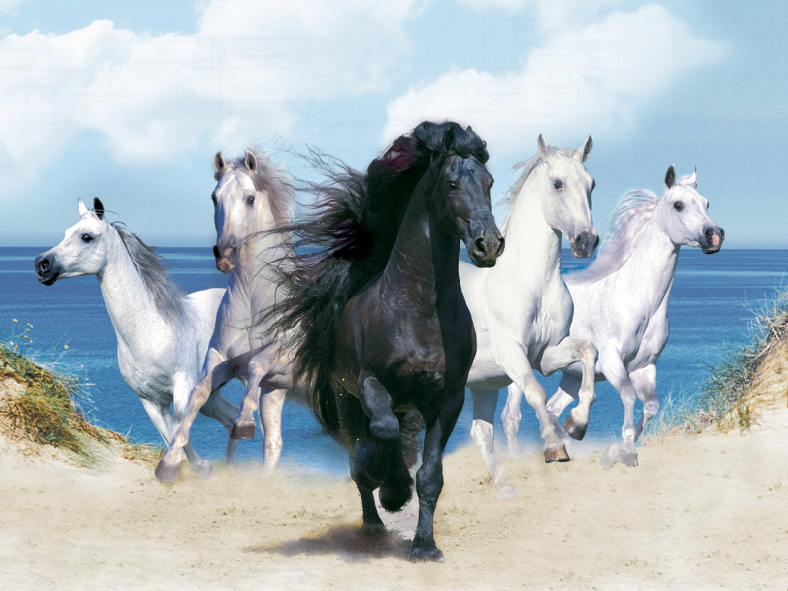 Animals wallpapers fantasy beautiful horses