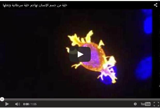 سبحان الله - فيديو مطاردة خلية دم بيضاء لجرثومة