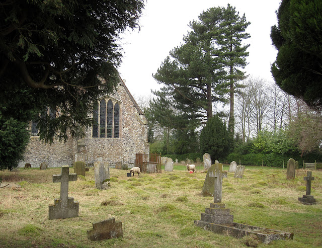 Cudham churchyard with sheep, 25 February 2012.