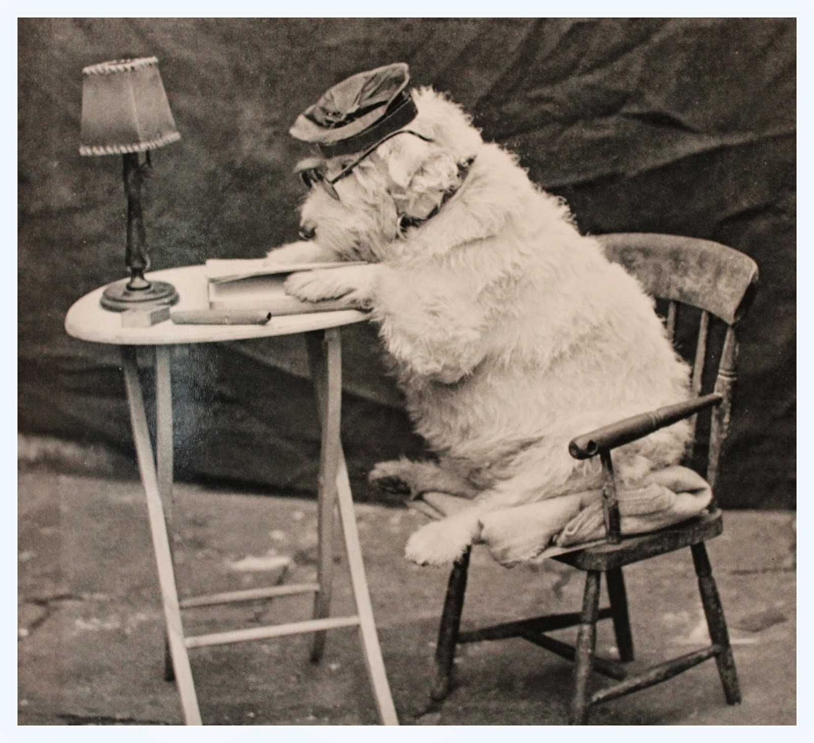 dog in hat reading a book at a table