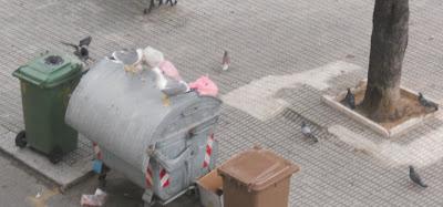 uccelli rifiuti Cagliari