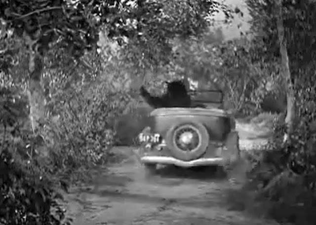 Three Stooges Bear Driving Car