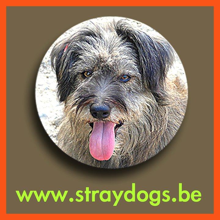 VZW Straydogs