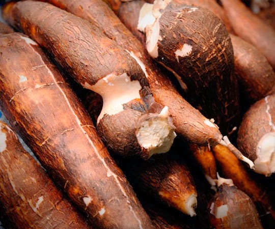 how to prepare manioc root