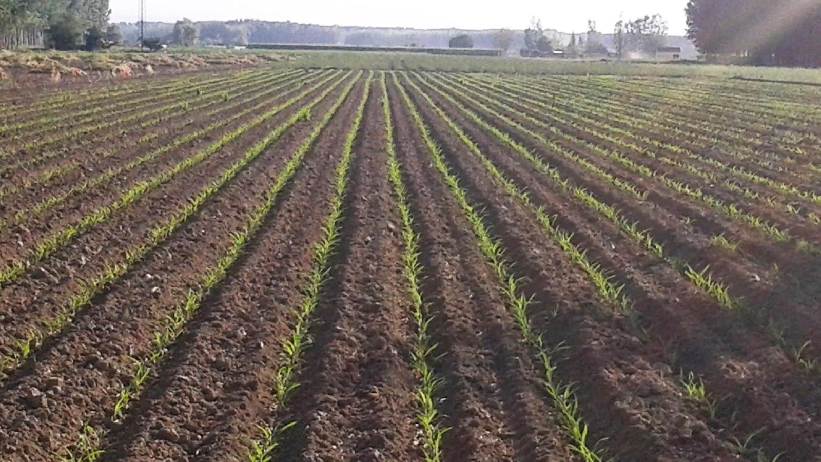 Recursos para la educaci n ambiental el suelo un recurso for Lo ultimo en suelos
