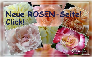 ROSEN-Seite!!!!