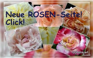ROSEN-Seite!!!!