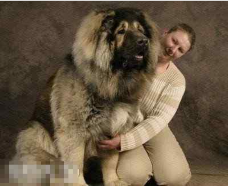 List Of Dog Breeds And Pictures