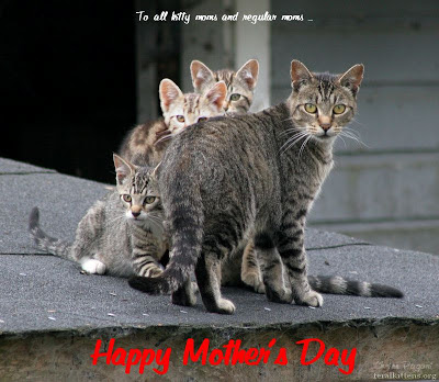 Happy Mothers Day cat and kittens