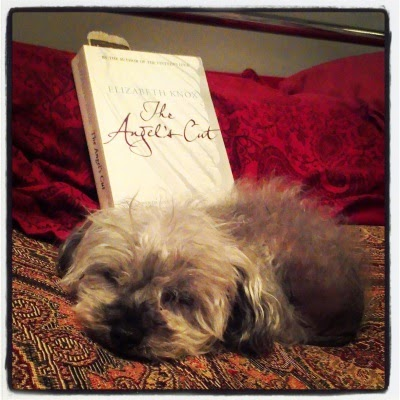 A fuzzy grey poodle with a scruffy haircut asleep on a bed beside a paperback copy of The Angel's Cut. The cover features the title against what is presumably a white wing.
