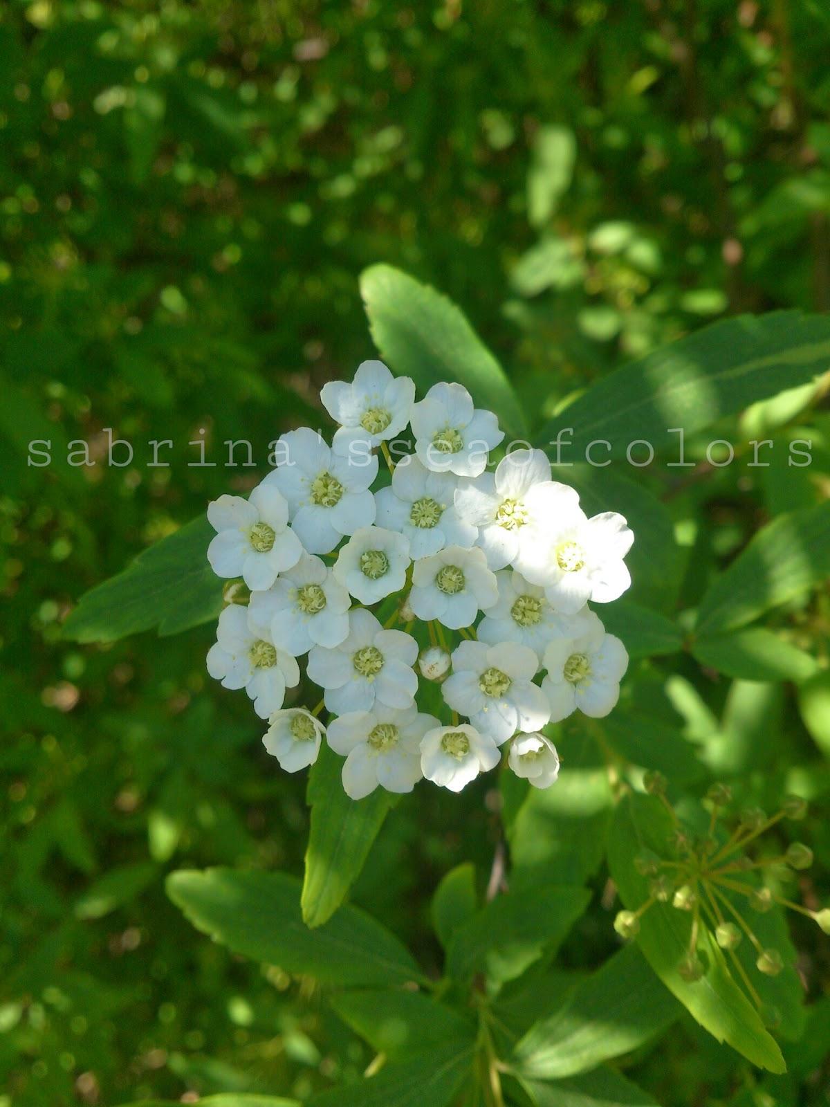 flores+blancas