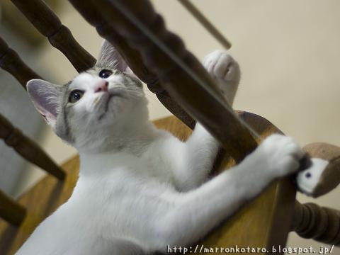 椅子の上で遊ぶ子猫