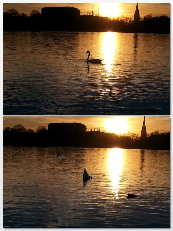 Swan butts in the sunset, Kensington Palace (29 Things I Learned in London) @TheBareMidriff