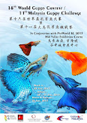 16th world guppy contest /11th Malaysia guppy challenge