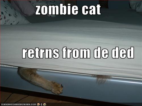 zombie cat gif