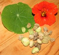 Frische und trockene Samen, Blatt und Blüte der Kapuzinerkresse