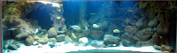 3d Aquarium Backgrounds3