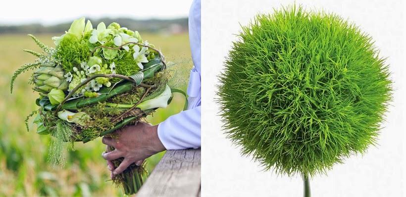 Premier O C Event Floral & Design: Dianthus barbatus Green ...