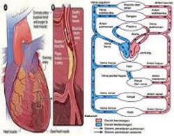 gangguan kesehatan sistem peredaran darah