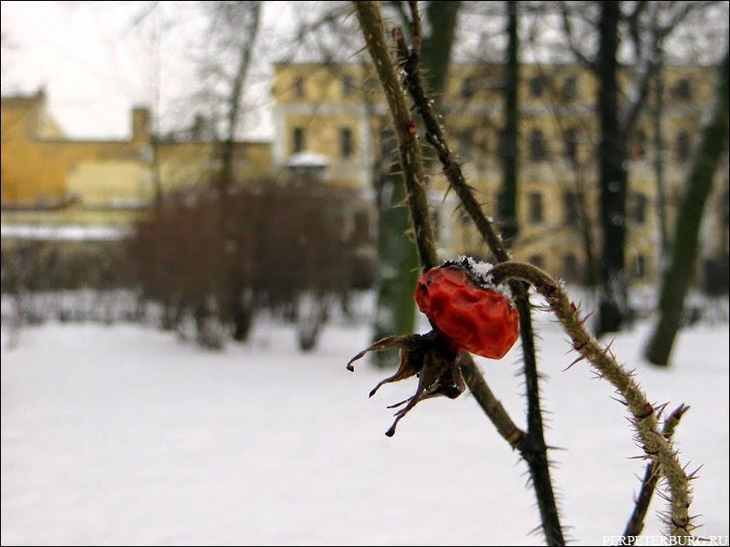 Сад Фонтанного Дома зимой Петербург фото
