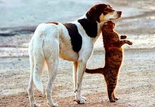 Perros y gatos graciosos