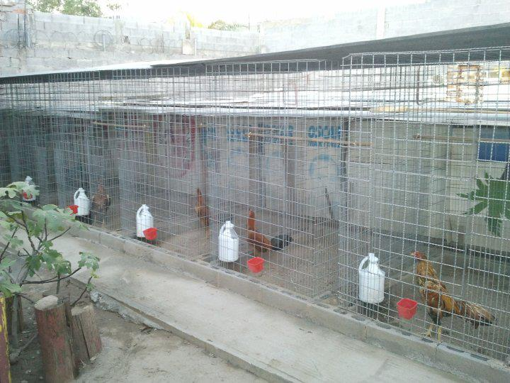 Los Amarillos Dog Show,Veppo Prieto