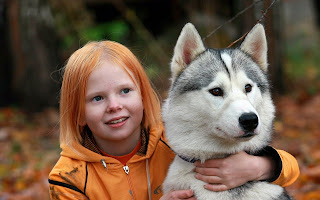 All About The WolfLike Agouti Husky  How To Train Ur Dog