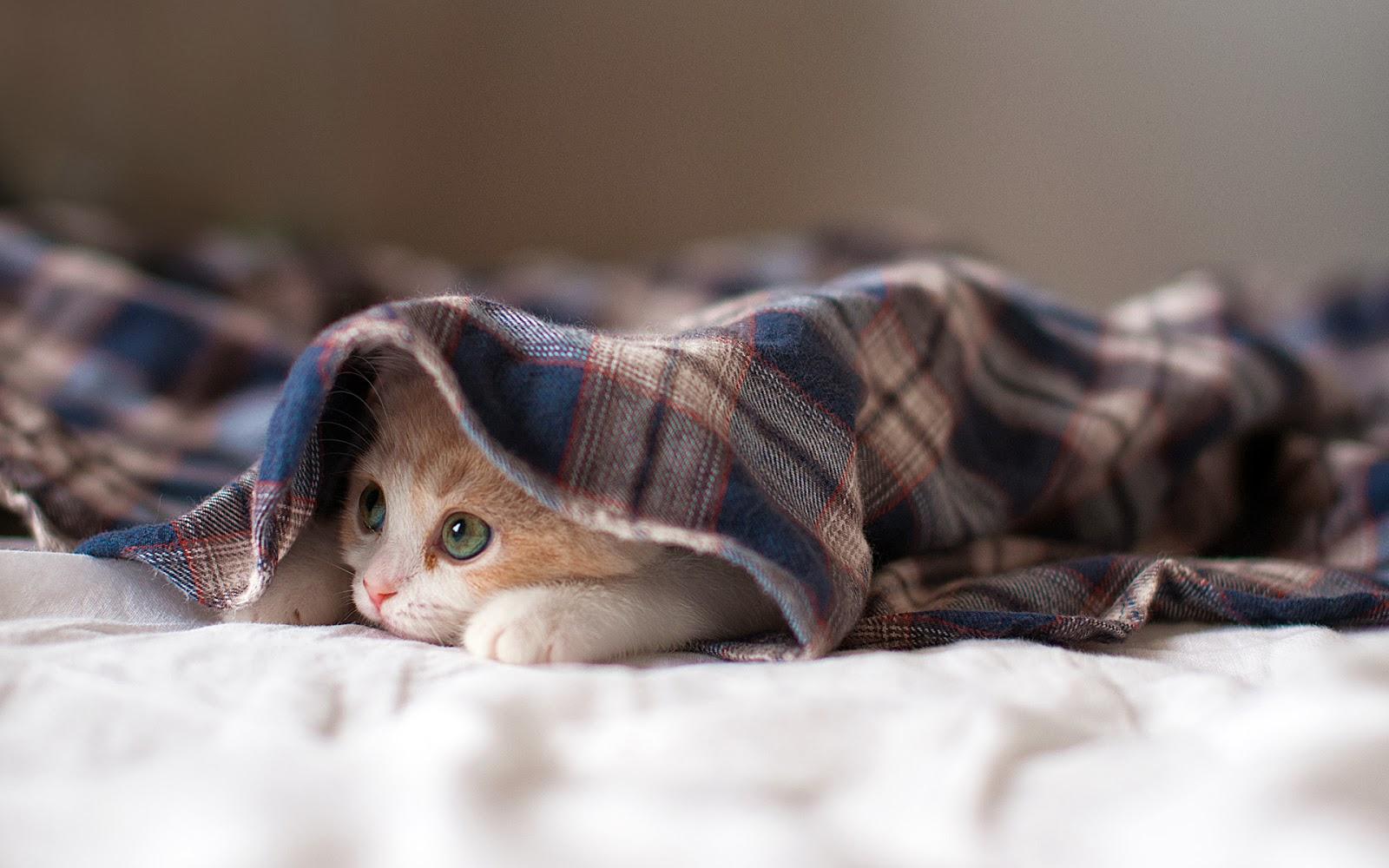 """<img src=""""http://2.bp.blogspot.com/-jKX0q7h9aWE/UuaEt9UDK5I/AAAAAAAAKaU/xIYtCtrf-6U/s1600/sleepy-kitten-wallpaper.jpg"""" alt=""""sleepy kitten wallpaper"""" />"""