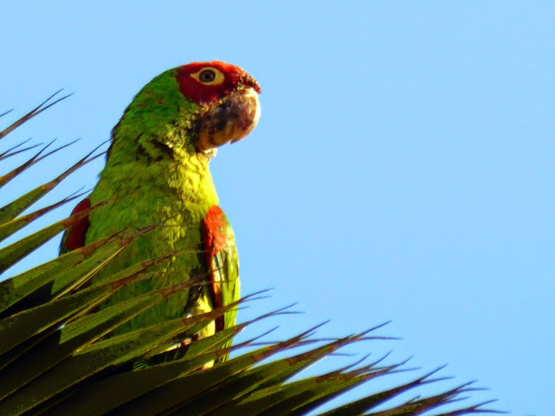 Parrot in a Palm Tree