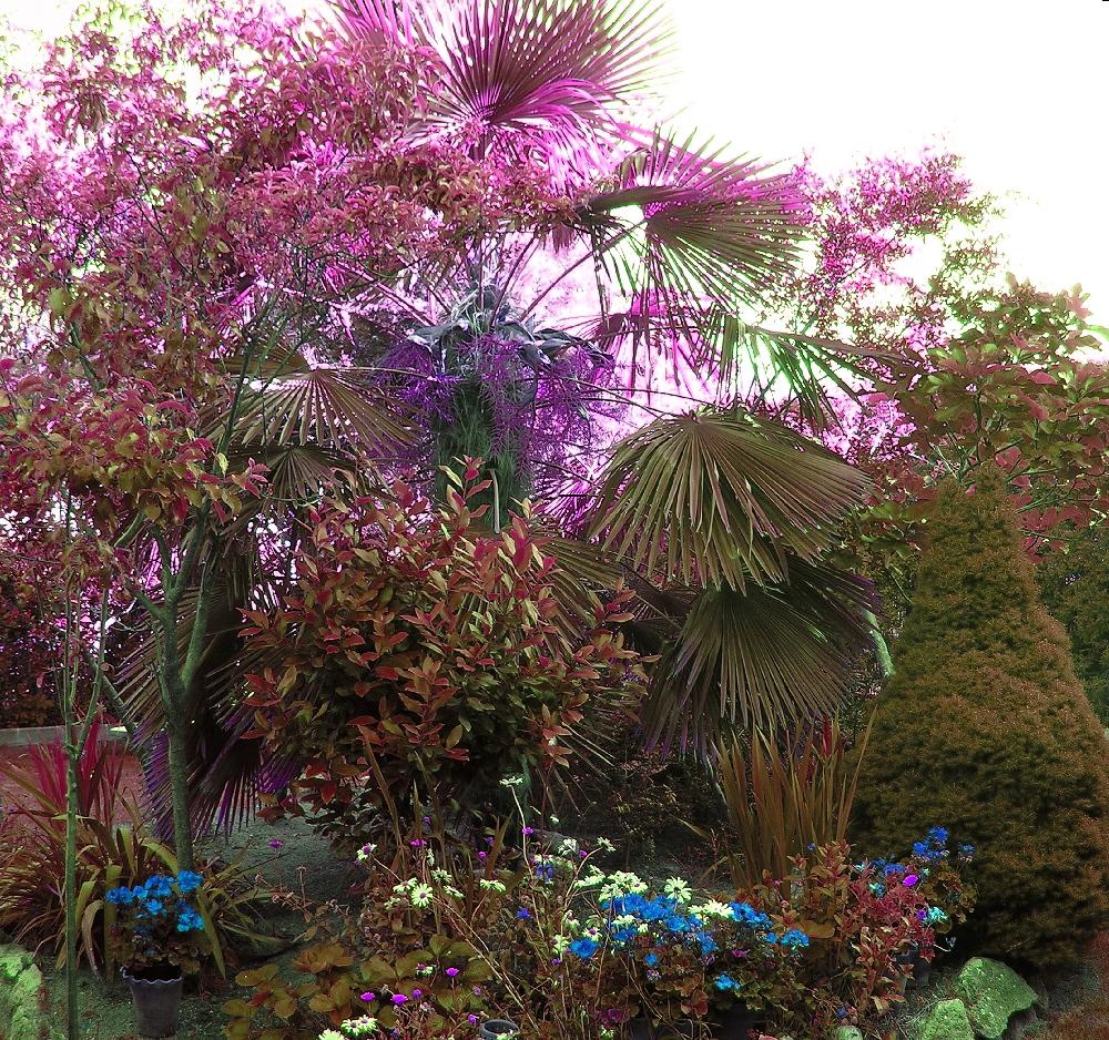 la mente el secreto jardín para todas las personas que tienen uno ...
