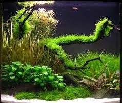 Aquascape Mini Style Design Inspired ~ Home Design Ideas and ...