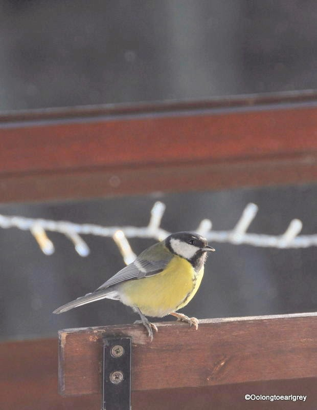 Blue Tit, Frankfurt, Germany