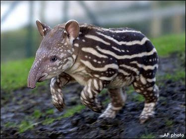 Los 10 animales más peligrosos del mundo Animales y  - fotos de animales grandes