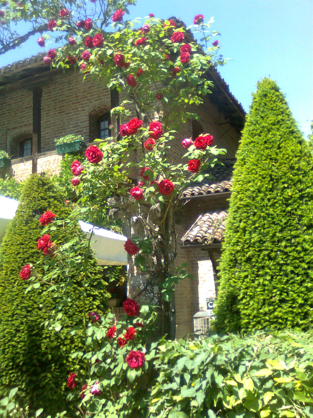 Il giardino sfumato arte e natura - Arte e giardino ...