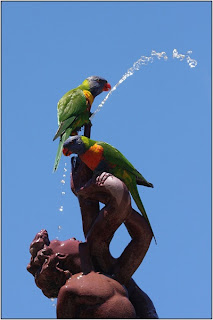 20120626 wood lorikeets on fountain 2012   Monthly Competition: Adelaide and North Adelaide