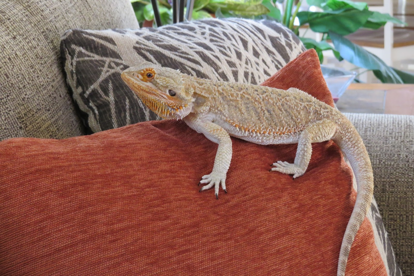 Fall Home Decor, Dobby the Bearded Dragon