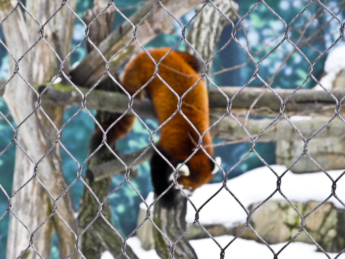 Wisconsin Explorer Henry Vilas Zoo Madison