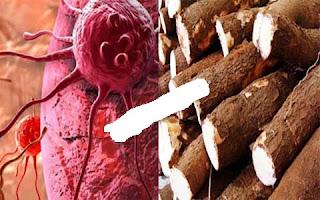 Walaupun Makanan Jadul Singkong Menyembuhkan Berbagai Jenis Kanker...!!!
